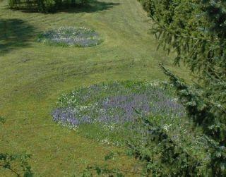 Eine Wieseninsel - Quelle: http://www.bund-muehlacker.de/naturgarten.shtml